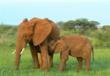 Elephants at Madikwe Game Reserve  Africa Adventure Consultants